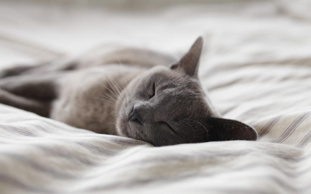 Mit Katzen im Bett schlafen?