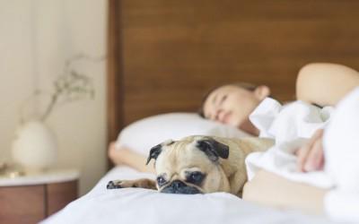 Mit Hund im Bett schlafen?